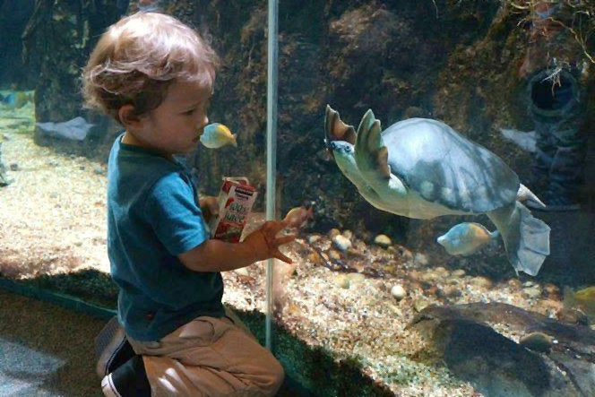 Child and turtle at the Los Angeles Zoo